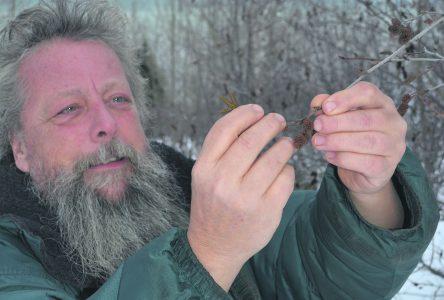 La forêt boréale nord-côtière, un garde-manger bien garni à exploiter