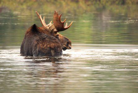 L'enquête de la Protection de la faune est complétée