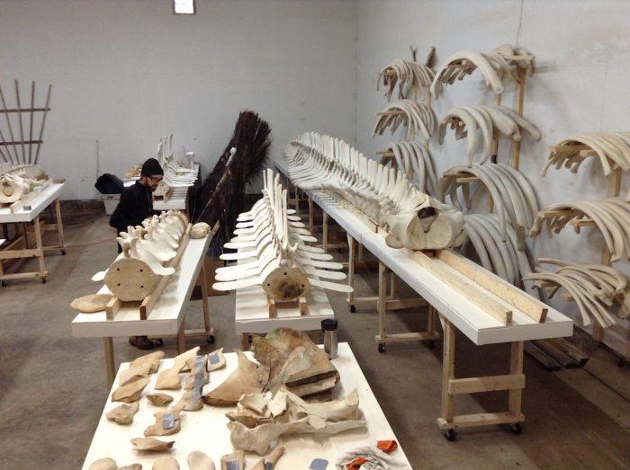 Le Centre d'interprétation des mammifères marins: une collection unique au Canada