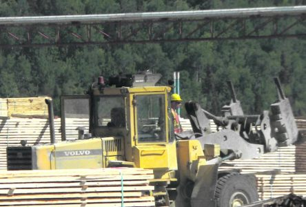 25 millions pour couper des arbres difficiles d'accès