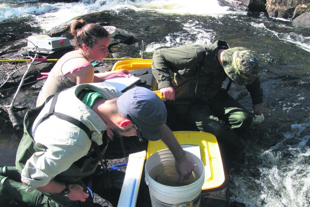 La faune piscicole de la rivière Laval dans l'œil de l'OBVHCN
