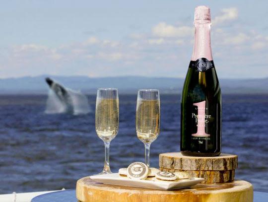 2 millions $ pour un salon haut de gamme pour l'observation des mammifères marins