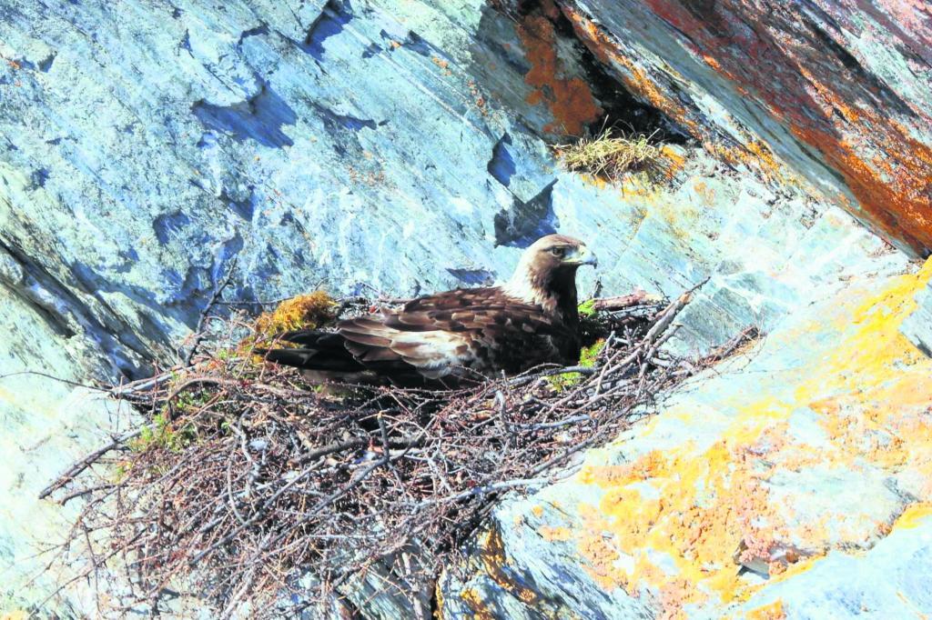 La nordicité dans toute sa splendeur au Festival des oiseaux migrateurs