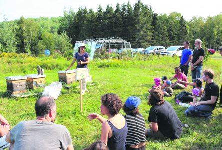 La Fête du Miel, un événement régional unique