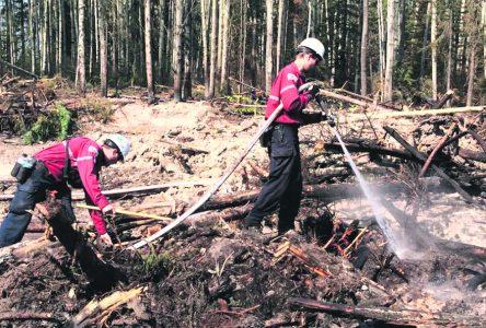 Les feux de forêt causent peu de dommages en 2019