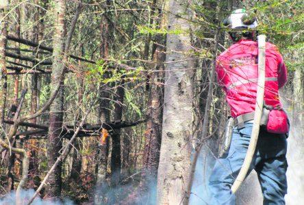 Partager sa fierté de travailler en forêt