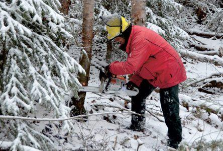 « La forêt, fier d'y travailler » : le concours d'écriture se poursuit