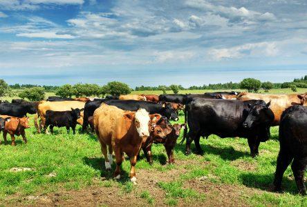 Vers la mise en valeur de la zone agricole en Haute-Côte-Nord