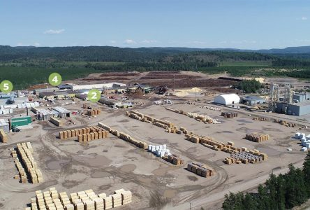 COFOR, Unisaco, Investra et Boisaco acquièrent Valibois